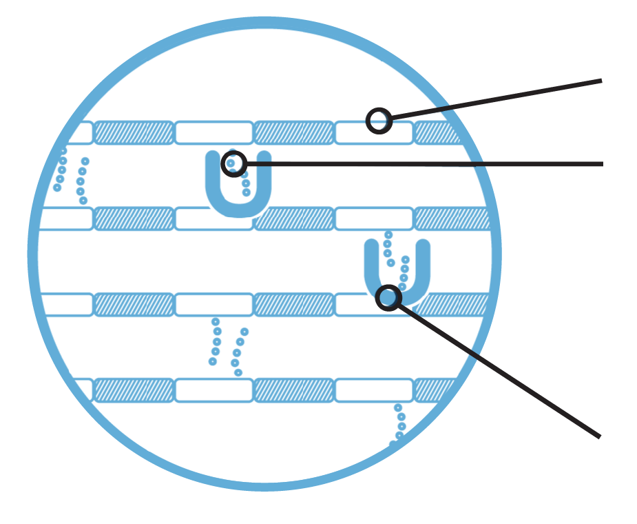 Inhibition of Pa cell wall synthesis icon